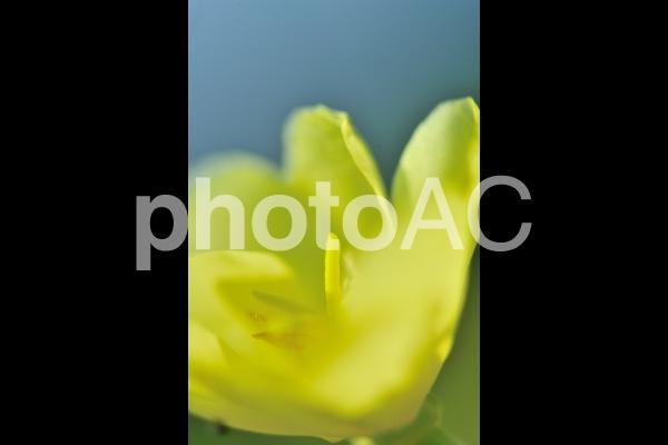 幸せを感じる黄色い花の写真