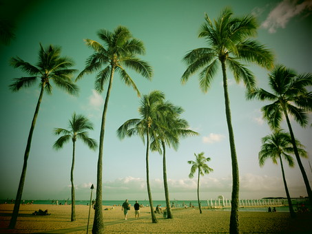 椰子の木 熱帯植物 植物 樹 木 樹木 屋外 外 晴天 晴れ 天気 太陽 空 青空 橋 雲 自然 景色 風景 光り 昼間 青 ブルー 人物 ビーチ 海 桟橋 ヤシ