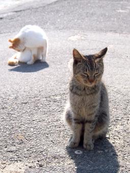 猫島 ネコ島 ねこ島 ネコ ねこ 猫 島ねこ 島ネコ 島猫 ノラネコ ノラ猫 ノラねこ 野良猫 野良ねこ 野良ネコ のらねこ のらネコ のら猫 瀬戸内海 島 男木島 道路 失恋 傷心