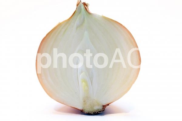 玉葱の写真