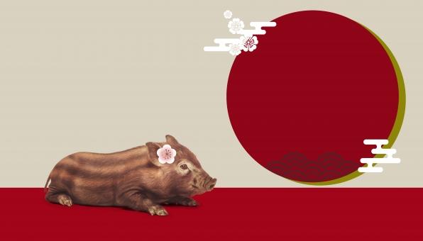 和柄とうりぼう2の写真