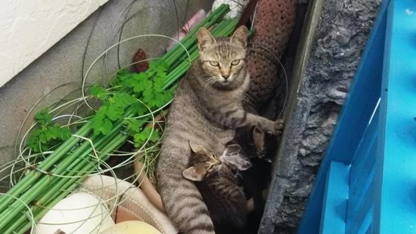 ネコ 猫 母親 母 愛情 ミルク 子猫 子育て 育児 癒し 思いやり ねこ 授乳 母乳 親子 アタッチメント attachment 愛着
