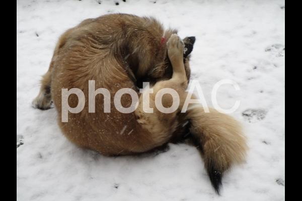雪に座る犬の写真