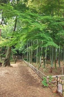 庭園 日本庭園 竹林 banboo 孟宗竹 植物 自然 緑 閑静 憩いの場所 静寂 和風 和様式 風景 景色 竹