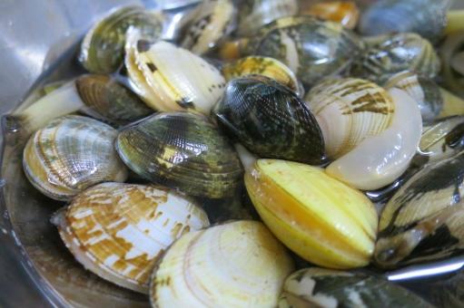 あさり アサリ 浅蜊 蛤仔 鯏 貝 貝殻 魚介類 魚介 新鮮 貝類 和食 砂抜き 料理 調理 みそ汁 味噌汁 みそしる 汁物 あさり汁 アサリ汁 潮干狩り 海 食材