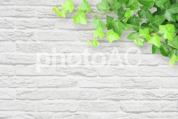 白いレンガの壁とツタの背景素材の写真