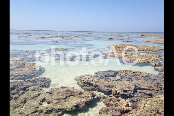 沖縄のサンゴ(珊瑚)の写真