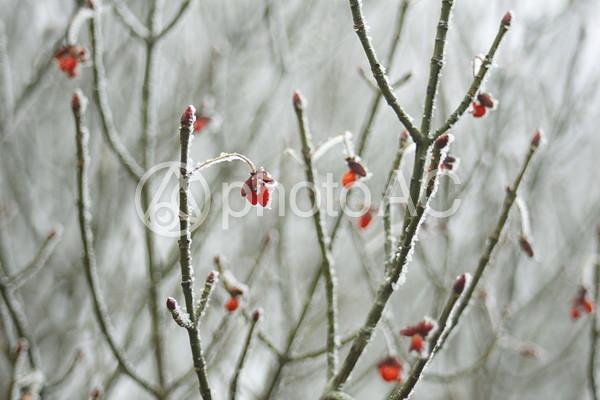 長崎 雪景色1の写真