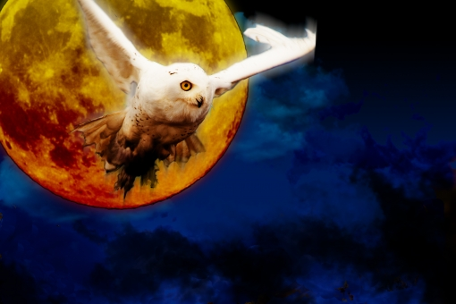 シロフクロウ シロ梟 白梟 ファンタジー 合成 夜空 雲 闇夜 月 月夜 風景 鳥 動物 幻想的 不気味 ロマンティック 物語 イメージ 昔話 魔法使い 魔女 ハロウィン Halloween HALLOWEEN 行事 イベント 背景 壁紙