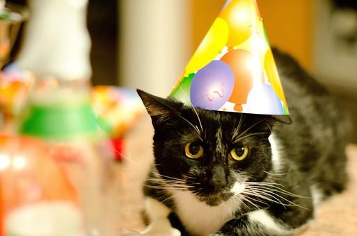 パーティー イベント おもてなし 招待 招く 祝う めでたい 宴会 盛り上がる 飾る おしゃれ 小物 猫 ペット かわいい 人気 愛嬌 帽子 おめかし ポップ 風船 紙 三角帽子 黒 白 きれい