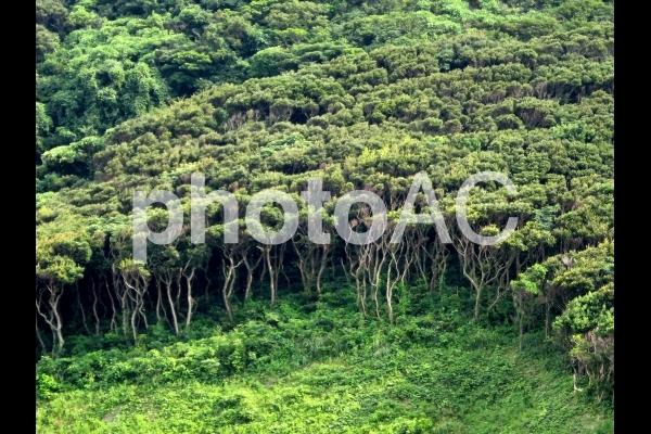 島の緑の写真