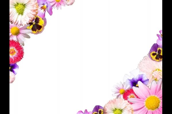 春の花のフレーム_1_切り抜き用クリッピングパス付きの写真