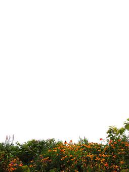 背景 フレーム バックグラウンド 素材 枠 写真 加工 CG グラフィック 枠組み 背景素材 フレーム素材 テンプレート フォトフレーム ひな型 白 背景白 下寄り 空白 スペース 花 花びら オレンジ色 橙色 葉 葉っぱ 緑 植物 自然 風景