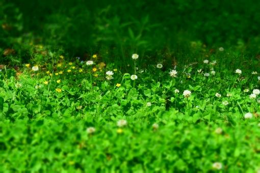 新緑 しんりょく 3月 4月 5月 6月 葉 葉っぱ 緑 黄緑 みどり きみどり 自然 綺麗 爽やか 見上げる 人気 植物 樹木 新鮮 森 林 公園 グリーン 暖かい 季節 若草色 若葉 木洩れ日 木漏れ日 こもれび 明るい 気分 最高 気持ちが良い 空気 クリーン 森林浴 背景 テクスチャ 壁紙 バックグラウンド ヒーリング リラックス 癒し マイナスイオン 初夏 夏 春 リラクゼーション 涼しい セラピー エコ eco アップ 接写 至近距離 雑草 可愛い かわいい ミニチュア風 絨毯 緑の絨毯