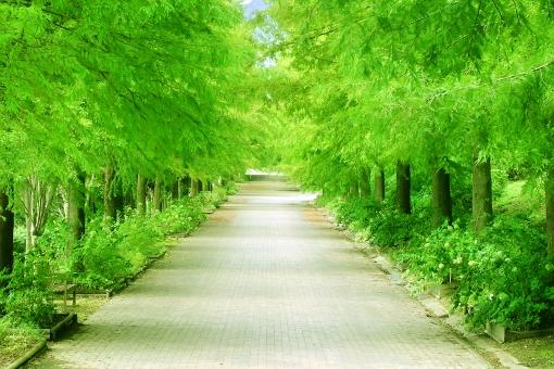 公園の街路樹の写真