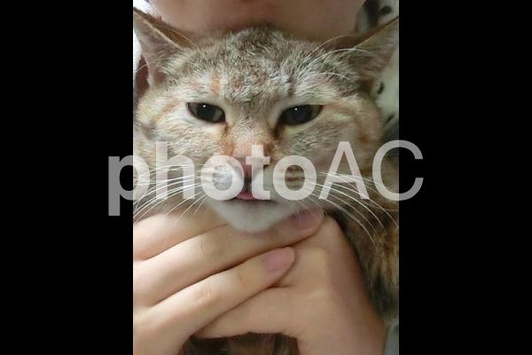 抱っこされて舌を出している猫の写真