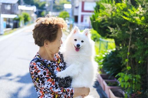 高齢女性・犬の写真