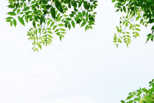 葉っぱ 葉 leaf リーフ 緑 緑色 グリーン green 空 青空 青い 青 青色 水色 空色 壁紙 背景 植物 自然 風景 テクスチャ 素材 若葉 若葉色 青葉 若々しい 癒し 元気 垂れ下がる 垂れる スナップ 涼やか 涼し気 涼 初夏 夏 陽射し 日差し