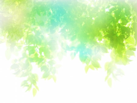 新緑木漏れ日の写真