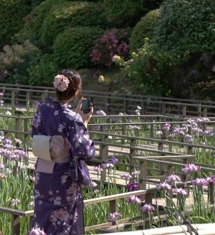 花菖蒲 女性 浴衣 紫の浴衣 紫の花菖蒲 梅雨 緑 花 植物 カメラ 菖蒲園 スマートフォン 梅雨の晴れ間 撮影 背景 はなしょうぶ ハナショウブ 浴衣の女性