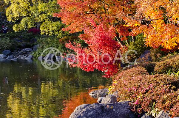 秋の風景16の写真