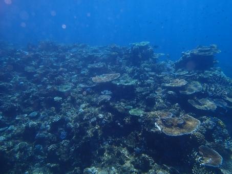 透明 グレート バリア リーフ 海外 珊瑚 サンゴ礁 サンゴ 海 青 カラフル 生命 自然 野生 外国 世界遺産 夏休み 夏 バカンス 海 オーストラリア ケアンズ スキューバ ダイビング スノーケリング スノーケル
