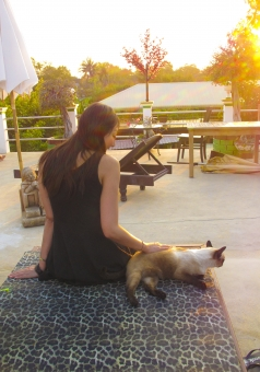 タイのシャム猫と女性と夕日の写真