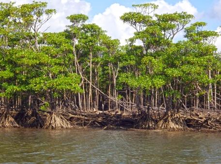 西表島 石垣島 沖縄 自然 ジャングル 川 マングローブ