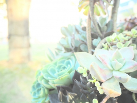 多肉 多肉植物 たにく セダム ツヤ 植物 ナチュラル グリーン 緑 光 ライト ファンシー ファタンジー 幻想的 背景 素材 スクリーン ハガキ 優しい ヒーリング パステル パステルカラー 虹色 レインボー 青 水色 ボケ 園芸 ガーデニング