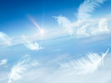 青空と羽根の写真