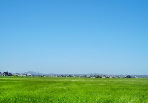 田園風景 田んぼ たんぼ 田舎 緑 グリーン 新緑 自然 風 青空 空 快晴 晴れ 稲 植物 風景 背景 4月 初夏 春