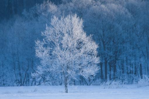 冬の北海道の写真