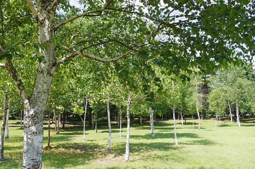 山奥 山 深緑 緑 グリーン 新鮮 空気 酸素 空 快晴 晴れ 晴天 曇り 白い雲 自然 環境 問題 エコ 青空 ブルースカイ 空 一本木 樹木 植物 芝 広場 白樺 夏 春