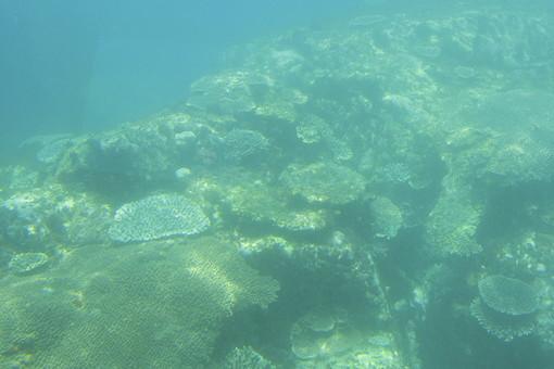 四国 愛媛 愛南町 宇和海海中公園 海中 水中 海 ブルー 造礁サンゴ テーブルサンゴ サンゴ礁 スキューバダイビング レジャー 水中撮影 水中写真 景色 幻想的な 濁った 自然 恵み 旅行 観光 名所 休日 休暇