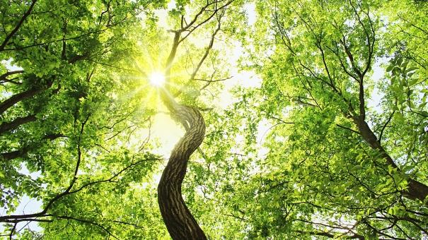 葉 枝 幹 木の葉 葉っぱ 森林 森 山 太陽光 太陽 陽光 ポストカード はがき ハガキ 葉書 暑中見舞い 木漏れ日 陽射し 日差し 紫外線 避暑 涼 蒸散効果 自然 風景 植物 涼しげ 涼しい ヒーリング リラックス リラクゼーション 茂る 繁殖 重なる 繁る わさわさ 成長 生命力 パワー パワースポット 背景 バックグラウンド 夏 春 16:9 神秘的 壁紙 横長