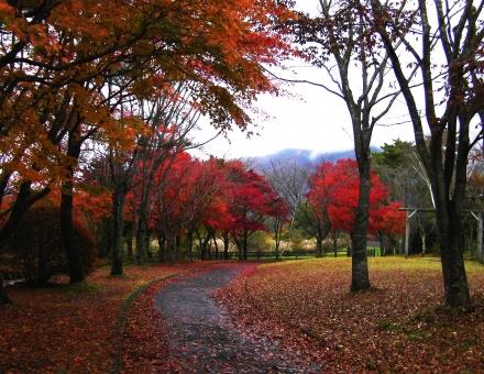 紅葉 秋風景 小道 秋 色とりどり 高原 朝 落葉 蒜山高原 十一月 朝曇り もみじ さわやか