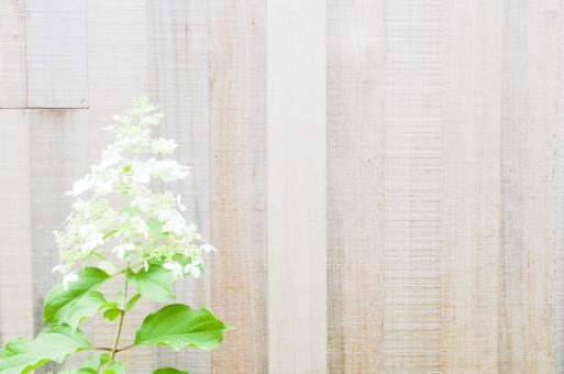 板壁 花 木製 壁 かべ カベ 植物 素材 ウッド 木 葉 葉っぱ 緑 グリーン テキストスペース 文字スペース 背景 背景素材 コピースペース diy カフェ レストラン ショップ バック バックグラウンド テクスチャ