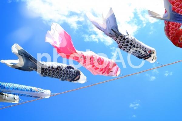 青空にキラキラ 鯉のぼり 2の写真