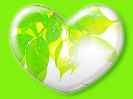ハート はーと heart 素材 背景 アイコン ラブ love 愛 ロマンチック バレンタイン フレーム クリスタル風 枠 さくら サクラ 桜 葉 ミドリ 緑 みどり グリーン green 白バック コピースペース