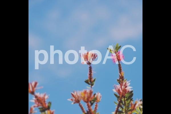 晴天の花の写真