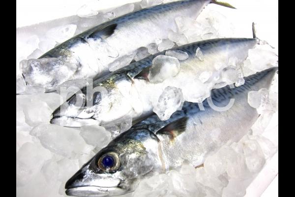 鮮生鯖の写真