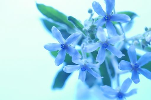 夏 ブルー 青 さわやか 爽やか 涼しい 涼しげ 水色の花 夏の花 青い花 清潔 清楚 可憐 水色 ブルースター アレンジ アレンジメント グリーン フラワー フラワーアレンジメント イメージ ブーケ グリーティングカード 背景 壁紙 植物 初夏 5月 6月 5月 6月 7月 8月 誕生日 プレゼント メッセージ カード 花束 フラワーアレンジ 花 春 リラックス リラクゼーション 幸せ 幸福 愛 恋愛 やわらかい ソフト バックグラウンド 背景素材 素材 マクロ アップ クローズアップ 明るい 華やか 美しい きれい 綺麗 かわいい 可愛い 癒し 美容 健康 アロマ