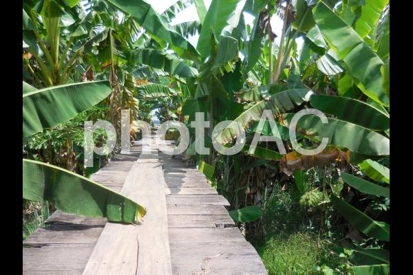 ジャングルの写真