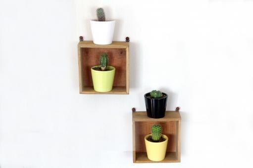 サボテン 多肉植物 植物 ミニチュア 小さい 棘 とげ 壁掛け 4種 黄色 緑 白 黒 観賞用