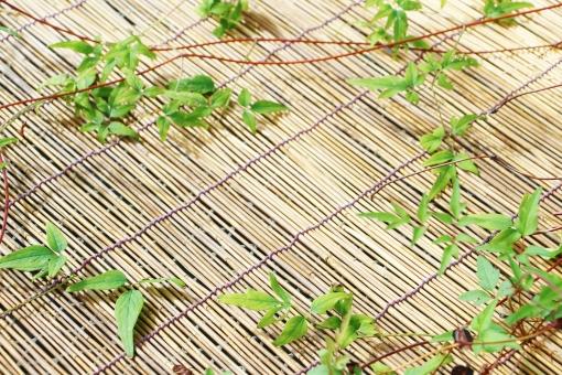 簾 すだれ 古い すのこ 簀の子 仕切り 日よけ 竹 アシ 目隠し 吊るし 御簾 のれん 軒先 虫よけ たてす エクステリア インテリア 装飾品 装飾 小物 雑貨 物 植物 蔓 つる性植物 葉っぱ 葉 緑の葉 緑 緑色 壁紙 背景 テクスチャ 素材 green グリーン