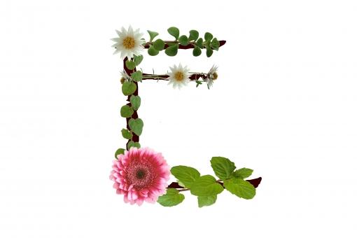 アルファベット ローマ字 英文字 植物 花 ガーベラ ハーブ 文字 テクスチャ 素材 白い花