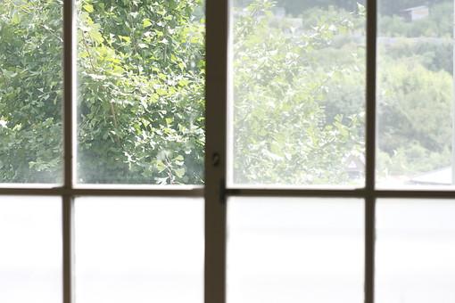 兵庫県 兵庫 西宮市 西宮 日本 関西 建物 窓 window 窓ガラス 校舎 学校 木枠 ガラス 木 樹木 緑 緑色 green グリーン 葉 葉っぱ 透明 クリア 開ける