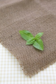ハーブ ミント 葉 緑 アップ 食材 フレッシュ ナチュラル 自然 グリーン 葉っぱ 新鮮 キッチン フード 料理 香草 茶 ミントティー ハーブティー 植物 葉脈 麻布 布 クロス 食卓