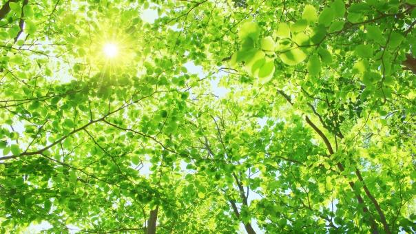 木漏れ日 葉 葉っぱ 茂る 重なる 繁殖 繁る 風景 自然 森 森林 植物 太陽光 光 紫外線 uv 山 明るい 陽光 新緑 緑 グリーン 爽やか さわやか 安堵 安心 ホッとする リラックス リラクゼーション 森林セラピー ヒーリング エコ エコロジー 森林保護 背景 バックグラウンド 春 夏 16:9 横長