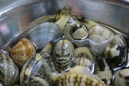 あさり アサリ 浅蜊 蛤仔 鯏 貝 貝殻 魚介類 魚介 新鮮 貝類 和食 砂抜き 料理 調理 みそ汁 味噌汁 みそしる 汁物 あさり汁 アサリ汁 潮干狩り 海 食材 塩水